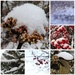 Winter Collage by loweygrace