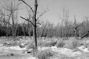 9th Jan 2015 - Frozen Bog