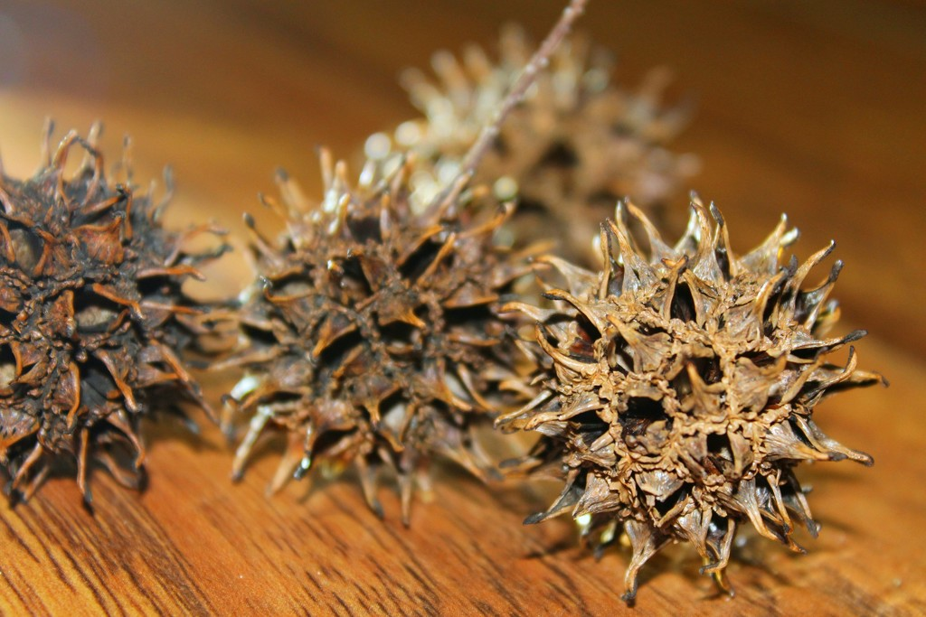 Witches Burrs by judyc57