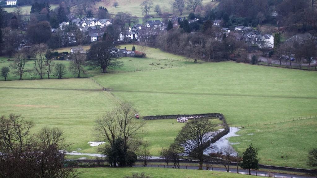 Gathering sheep by happypat