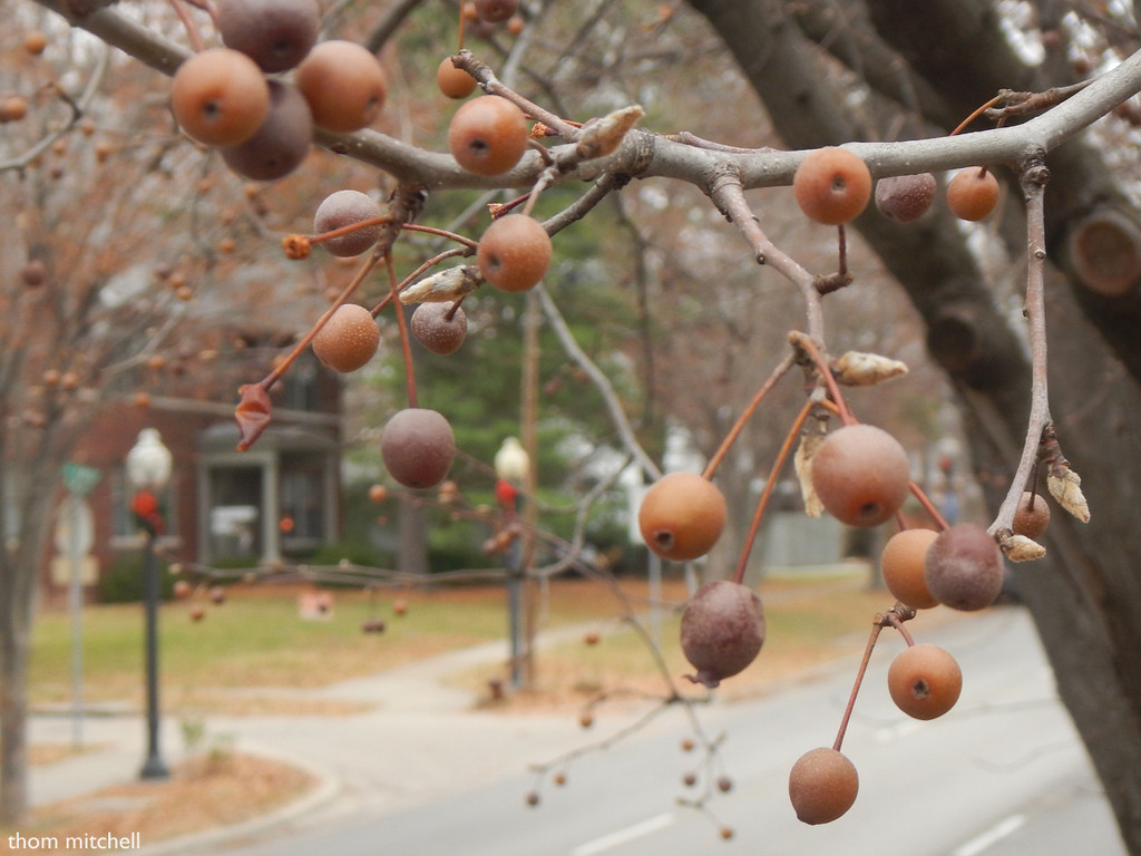 Nature's 'Christmas tree' ornaments by rhoing