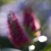 Technicolour blur*** #2