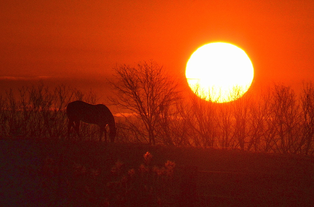 Horse Wins Golden Globe by kareenking