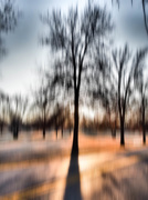13th Jan 2015 - Long Shadows