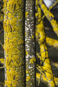 14th Jan 2015 - Hope you lichen this one