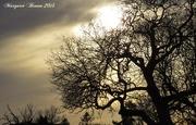 15th Jan 2015 - Winter silhouettes