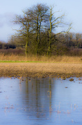 17th Jan 2015 - On frozen pond