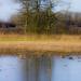 On frozen pond by shepherdman