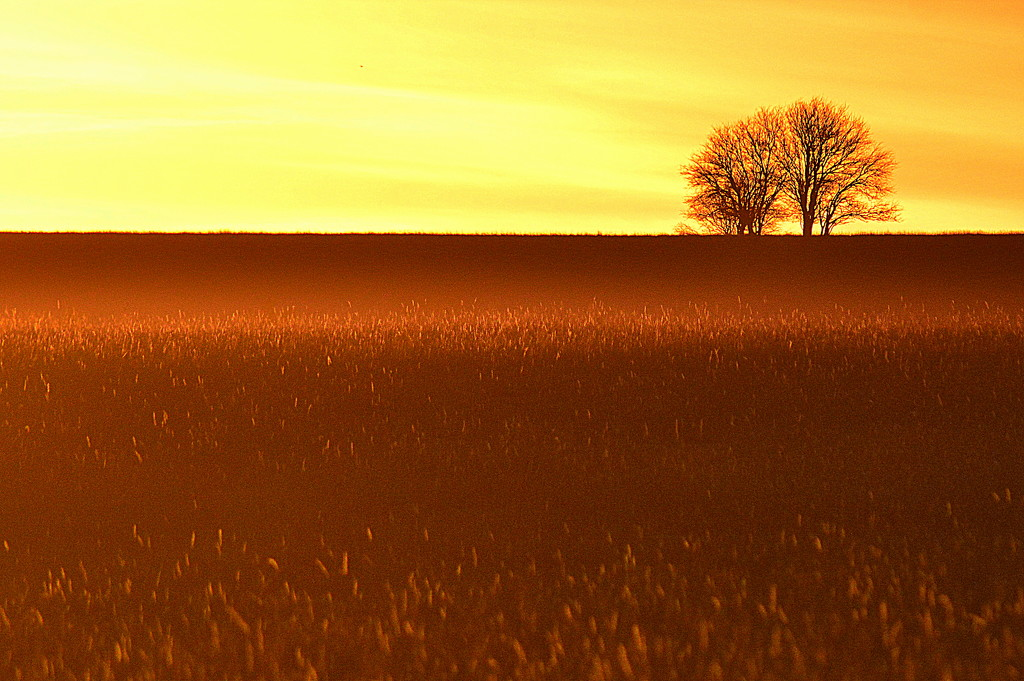 Enchanted Field by kareenking