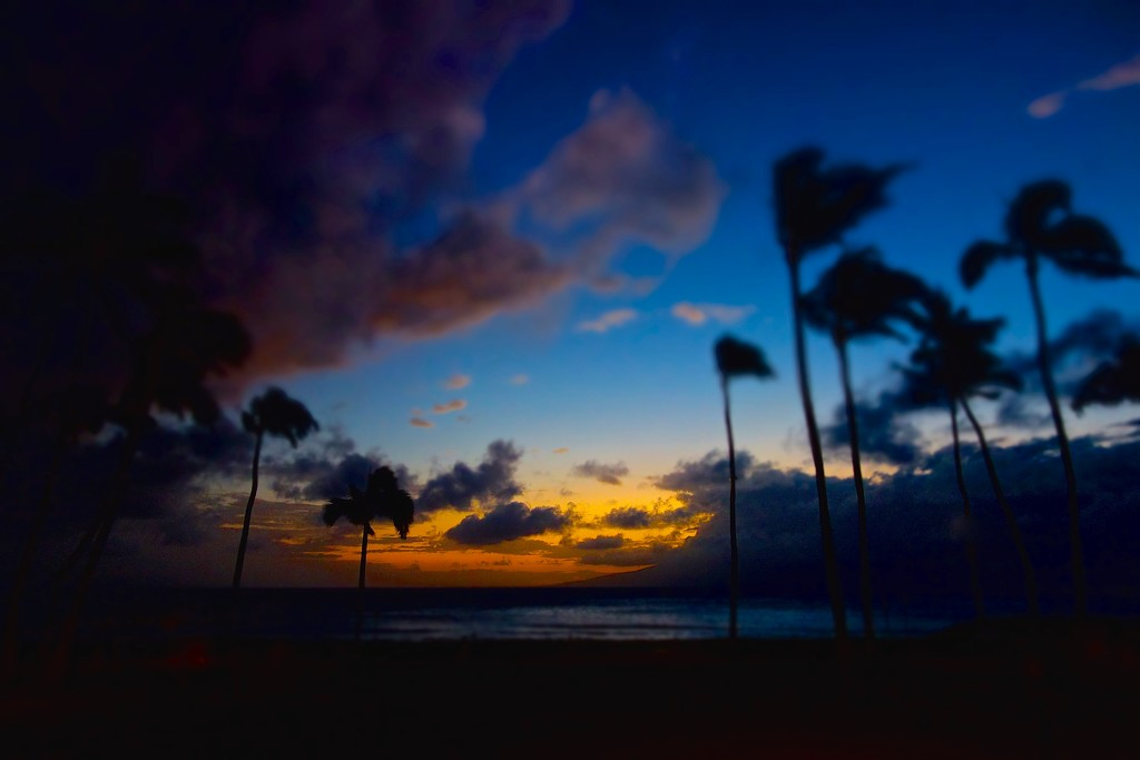 Windy sunset. by cocobella