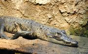 20th Jan 2015 - See Ya Later Alligator