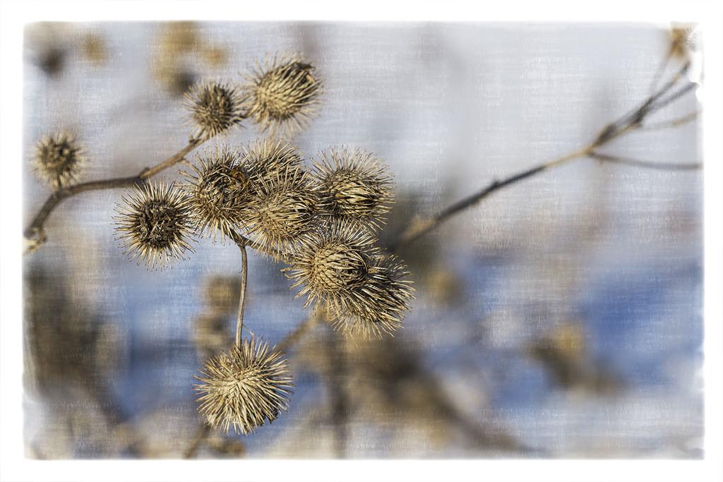 Winter Rags 4 by gardencat