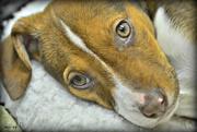 19th Jan 2015 - Sad Puppy Face