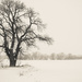just a big old bare tree by tracymeurs