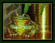 19th Jan 2015 - Jeramiah Was a Bullfrog