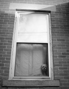 21st Jan 2015 - How Much is that Doggy in the Window?