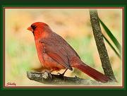 22nd Jan 2015 - Seeing Red