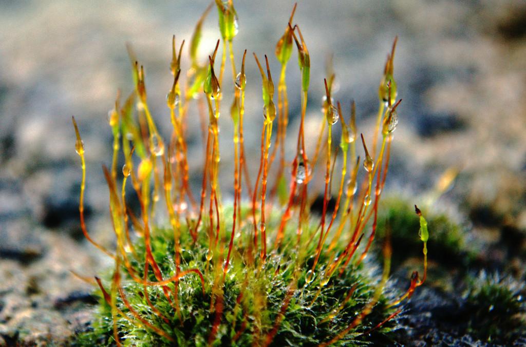 Glistening moss by ziggy77