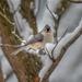 Hello my little snow bird