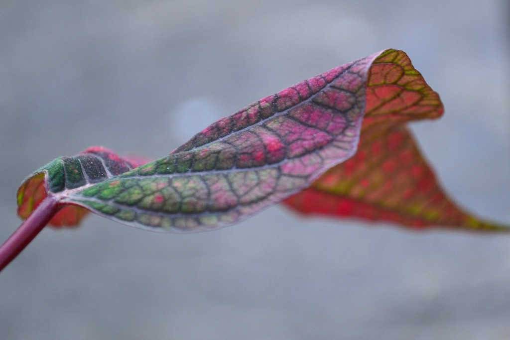Fancy leaf by ziggy77