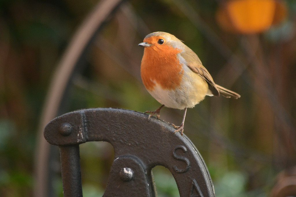 Robin on a plastic pump by richardcreese
