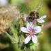 Bee incredible by flyrobin