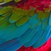 Rainbow feathers by cocobella