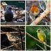 25th January 2015 -  Big Garden Birdwatch  by pamknowler