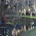 Spanish moss reflections in rain puddle, Charles Towne Landing State HIstoric Site, Charleston, SC by congaree