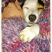 It's A Dogs Life (Daisy sleeping in Rosie's arms) by carolmw