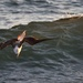 blue-footed booby by mjalkotzy