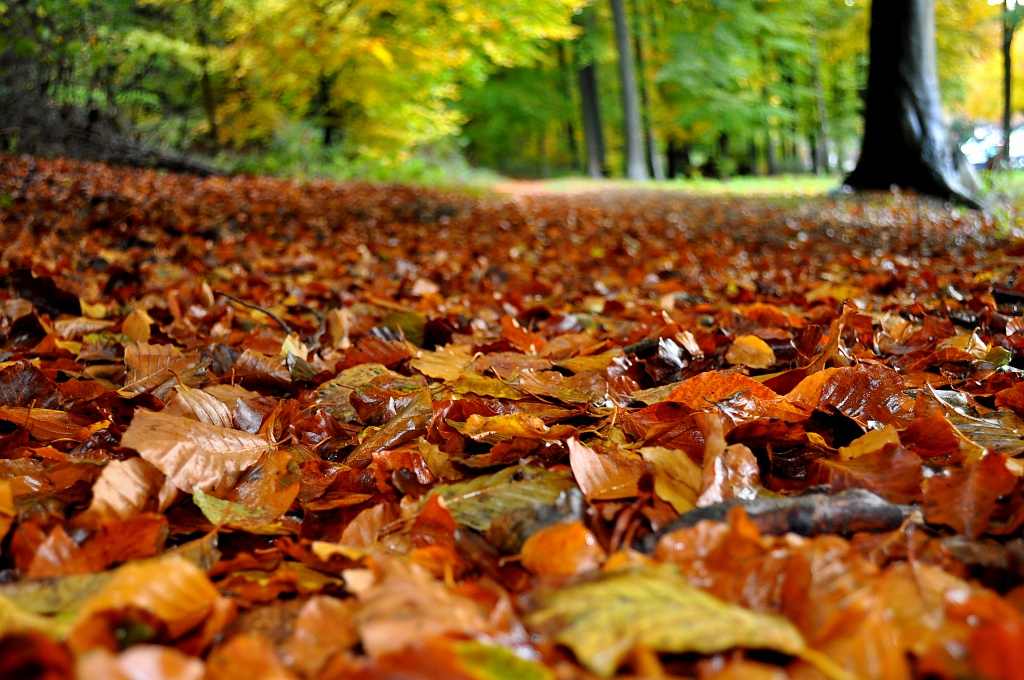 Autumn Fall by andycoleborn