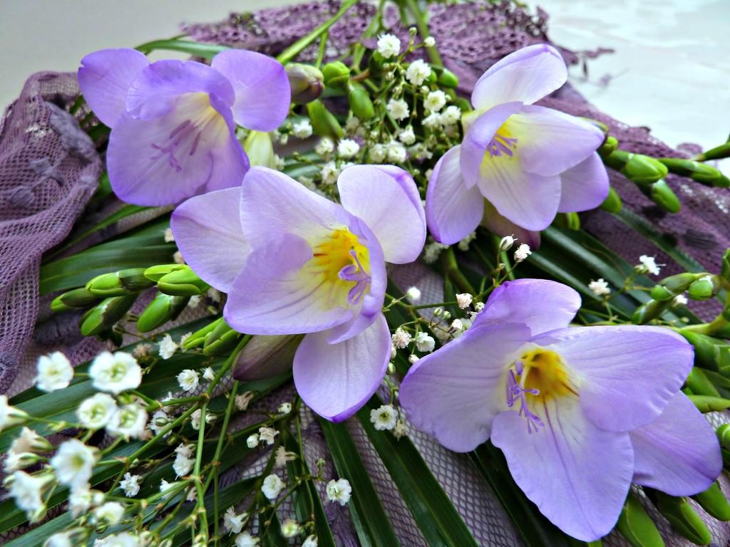 Freesia  flowers  by wendyfrost