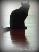 30th Oct 2010 - Ghost Cat