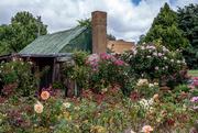 27th Jan 2015 - Rose cottage