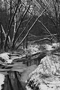 27th Jan 2015 - B/W Winter Stream