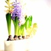 First hyacinthus. by cocobella