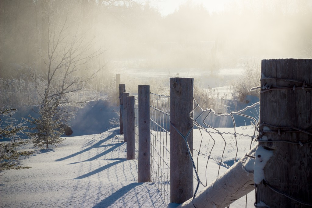 Frosty fence line by tracymeurs