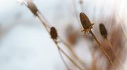 29th Jan 2015 - Winter Garden