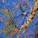 Deep reflection by congaree