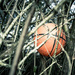 The Ball in the Hedge