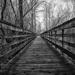 Boardwalking  by epcello