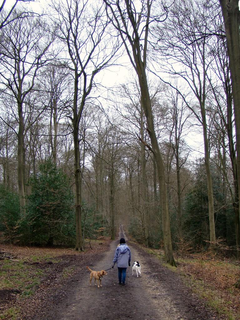 Feb 01: Walking by bulldog