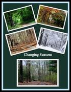 31st Jan 2015 - Changing Seasons
