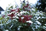 1st Feb 2015 - Snowy icey stuff!
