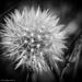 Weed beauty by flyrobin