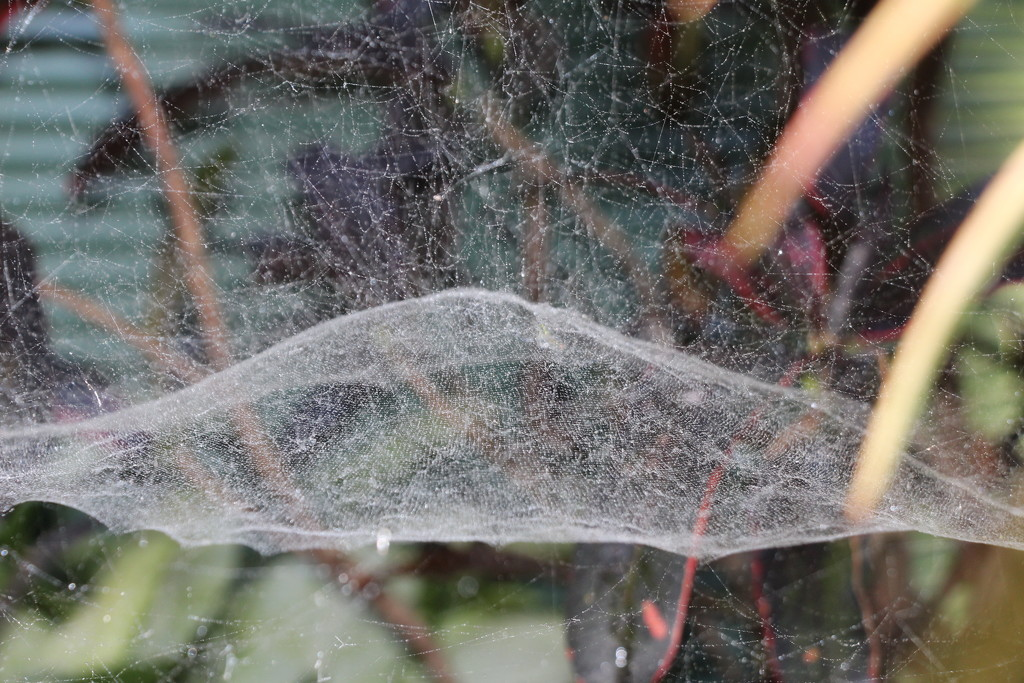 Now That's a Spider's Web by terryliv