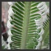 Fronds of the Cycad by loey5150