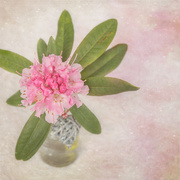2nd Feb 2015 - Flower with textures