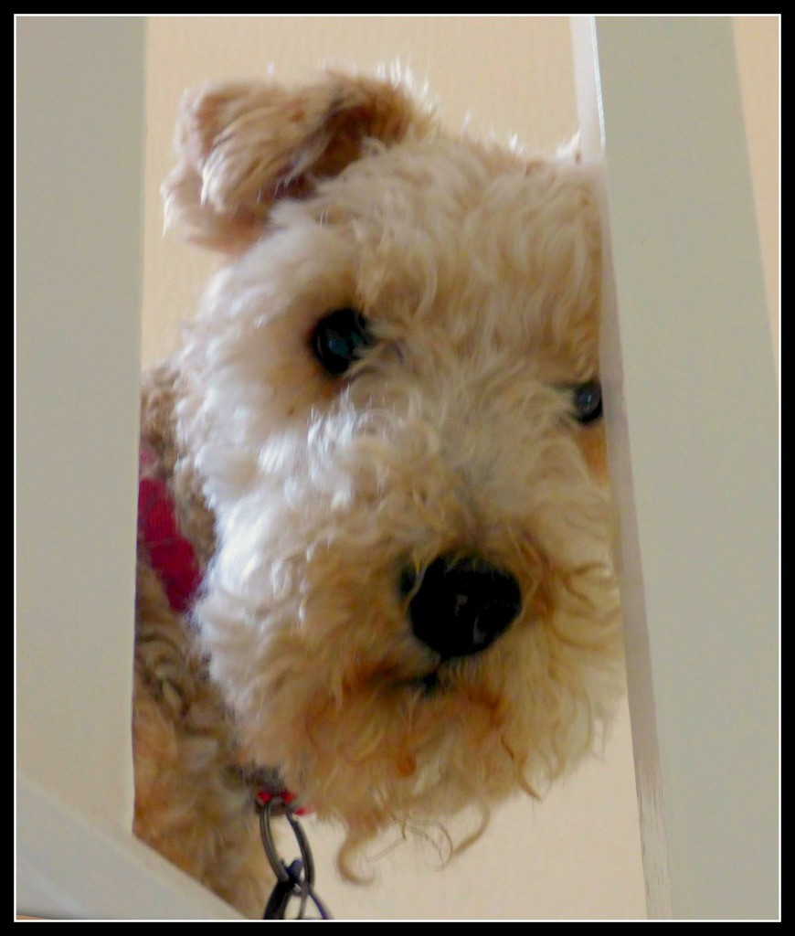 Alfie -our dog  by beryl